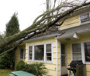 Tree Damage Services and Restoration Services - J&R Contracting - Toledo, OH, Northwest Ohio