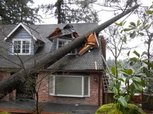 Tree Damage Services - J&R Contracting - Toledo, OH, Northwest Ohio
