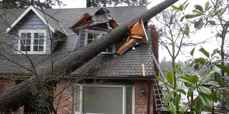 Case Study: Wind Related Tree Damage