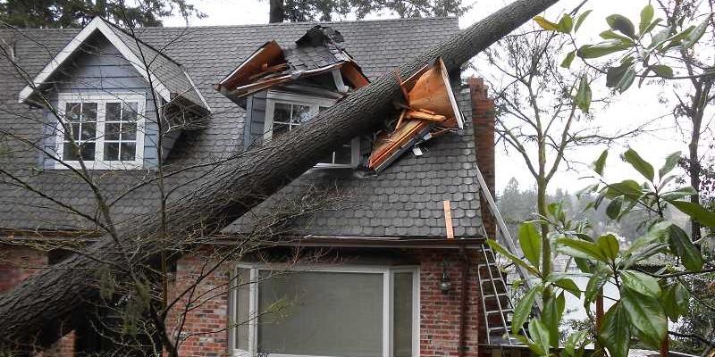 Case Study: Wind Related Tree Damage
