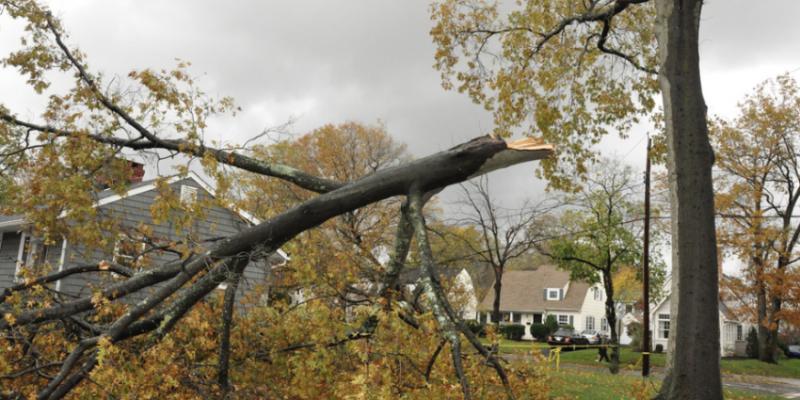 Wind Disaster Standard Procedures