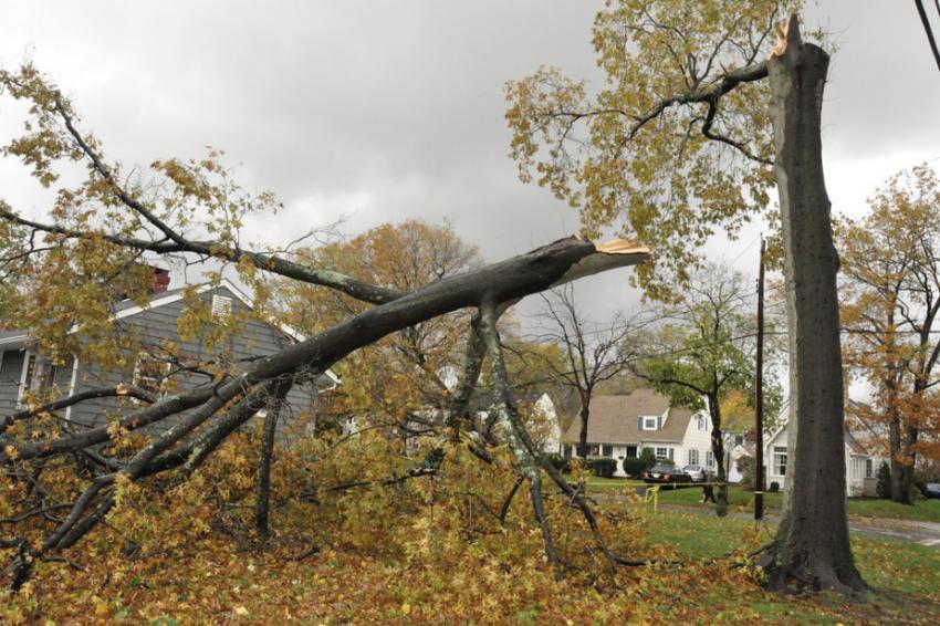 Tree Damage Restoration Services - J&R Contracting - Toledo, OH, Northwest Ohio